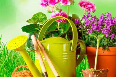 Органическое озеленение