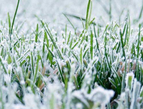 Уход за газоном в зимний период